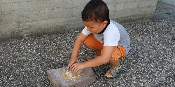 Trigu… Dal grano al pane